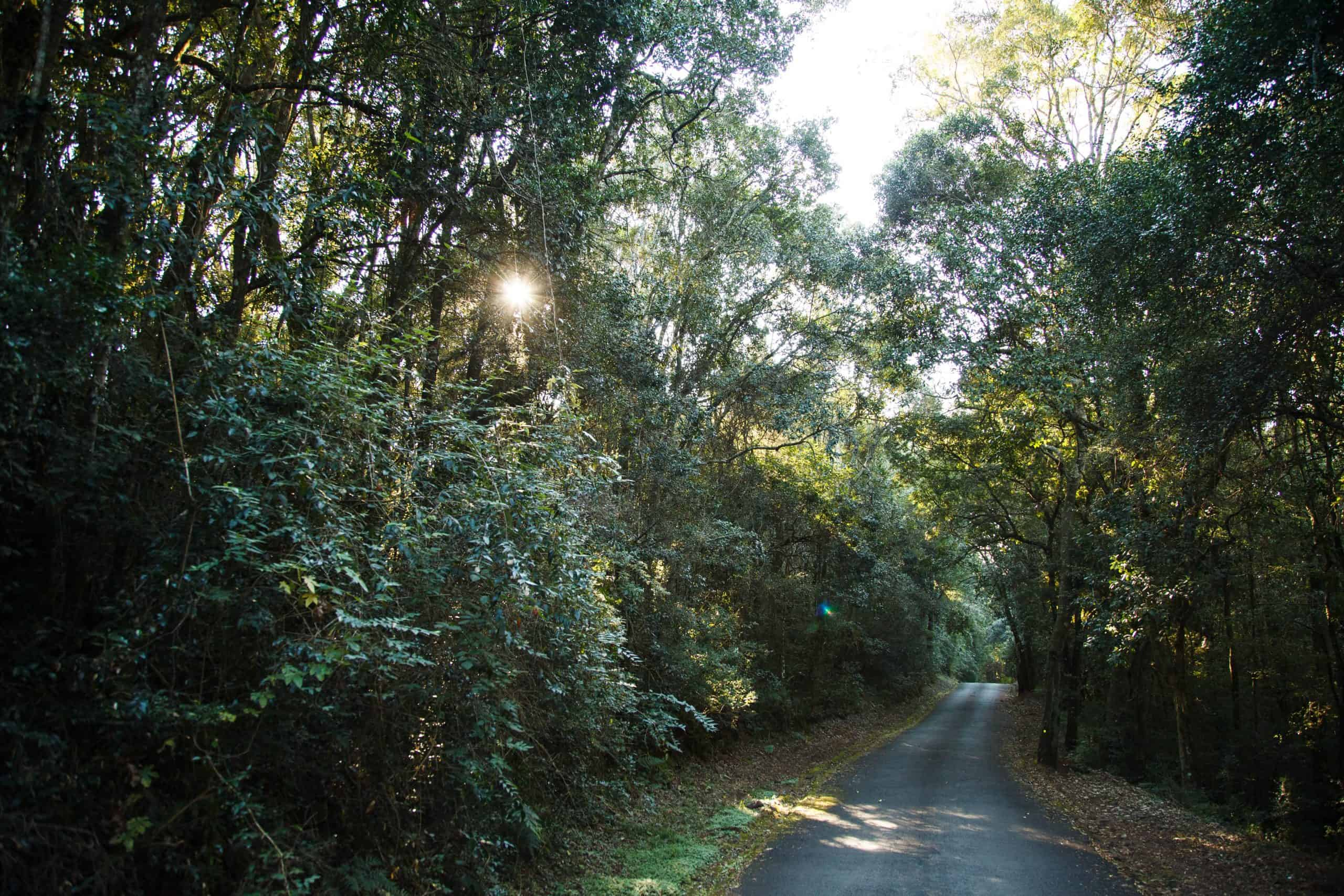 mount sheba forest road